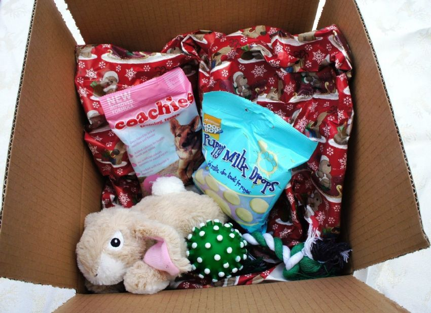 PUPPY CHRISTMAS HAMPER WITH PLUSH BUNNY MINI ROPE TOY SQUEAKY BALL AND TREATS